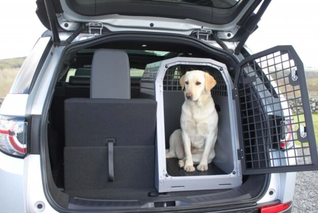 Retriever in car crate